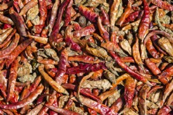 DRIED HOT CHILI