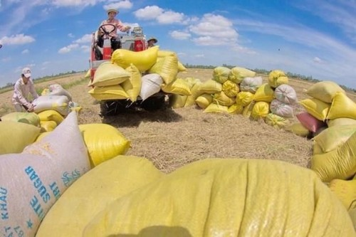 Rice exports bring home 2.24 billion USD in nine months