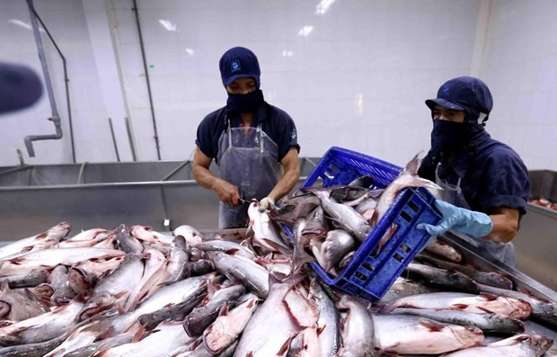 Tra fish exports to Russia slump