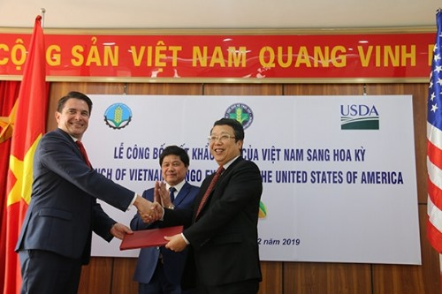 Vietnamese Mangoes to be Exported to US
