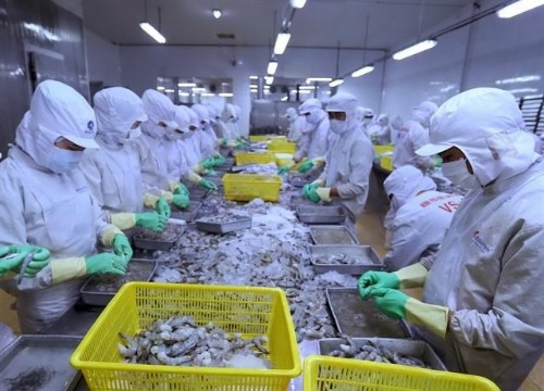 Shrimp exports expected to pick up in second half