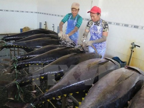 Greece increases imports of Vietnamese tuna