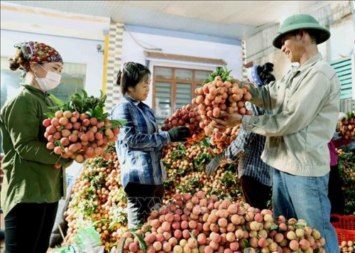 Teleconference seeks ways to bring Vietnamese consumer goods to China