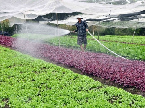 Opportunities for Strong Development of Agricultural Value Chains