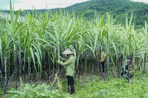 Việt Nam initiates anti-dumping investigation on sugar imported from Thailand